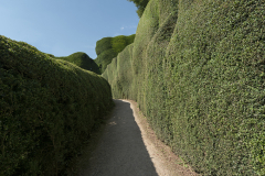 Whales Powis Castle Hedge