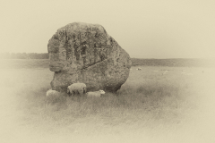 Avebury Stone and Sheep Antique