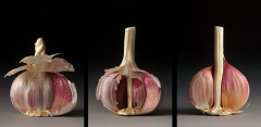 Anatomy of a Garlic