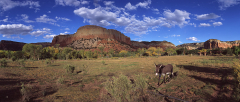 Ghost Ranch Mule Pano