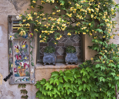 Vaison la Romaine Roses and Window
