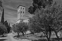 Church and Olive Trees B&W