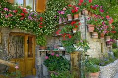 Assisi Flowers